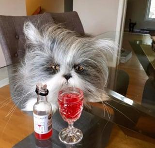 Cat wine_web